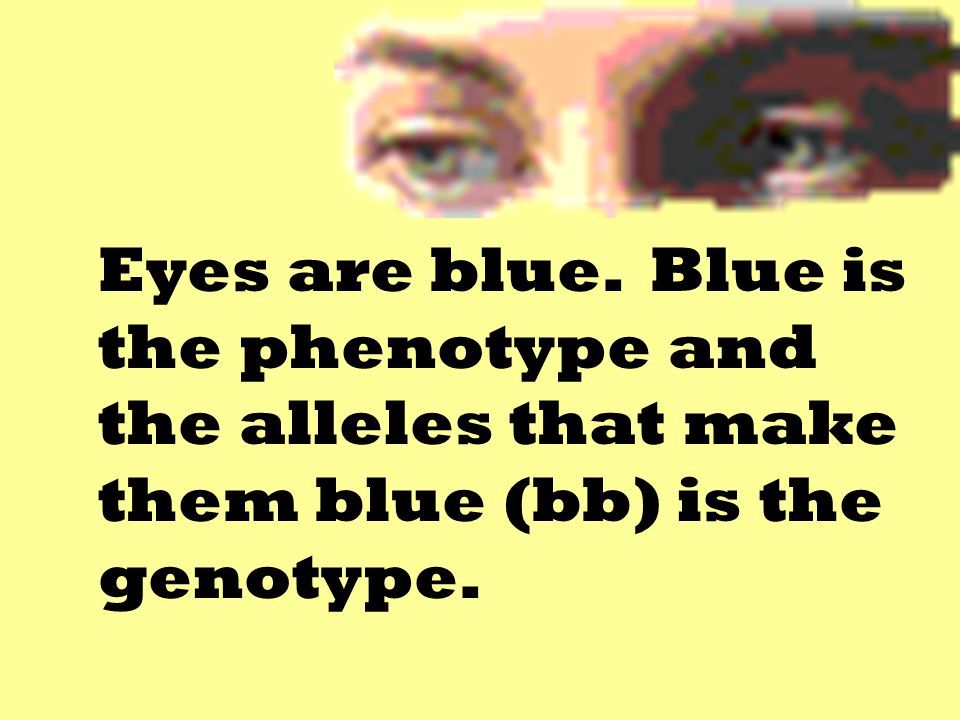 Eyes are blue. Blue is the phenotype and the alleles that make them blue (bb) is the genotype.