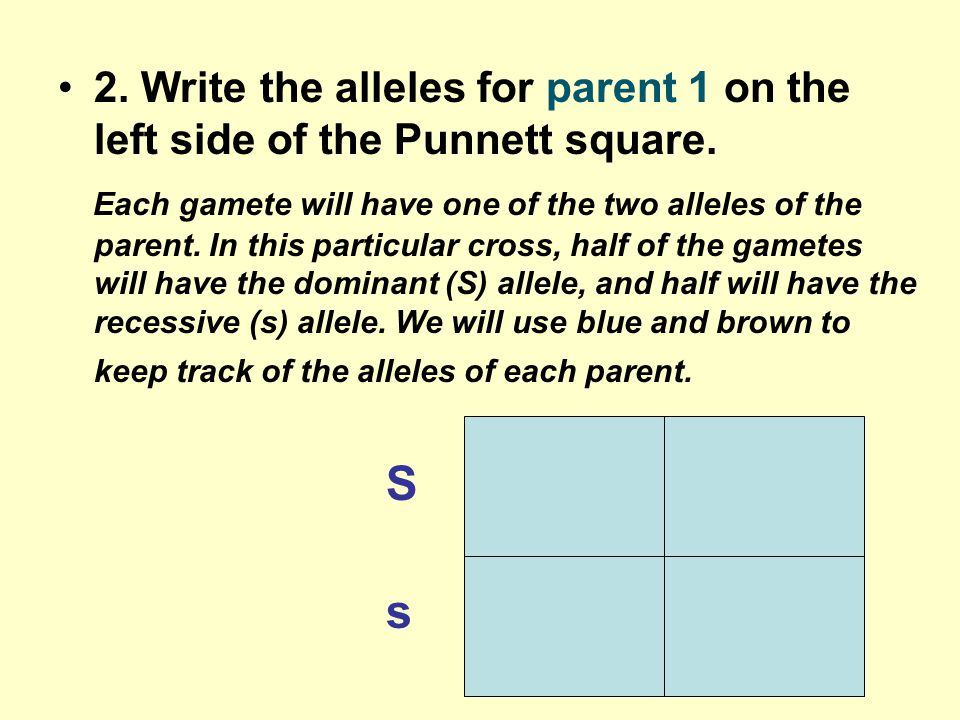 2. Write the alleles for parent 1 on the left side of the Punnett square.