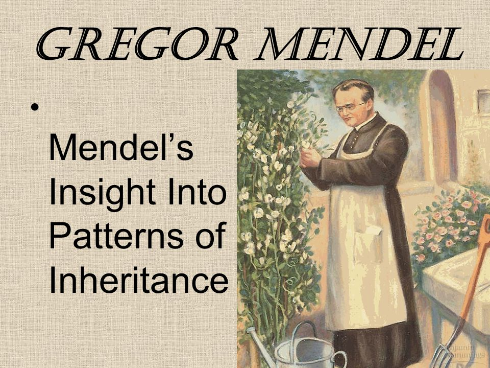 Gregor Mendel Mendel's Insight Into Patterns of Inheritance