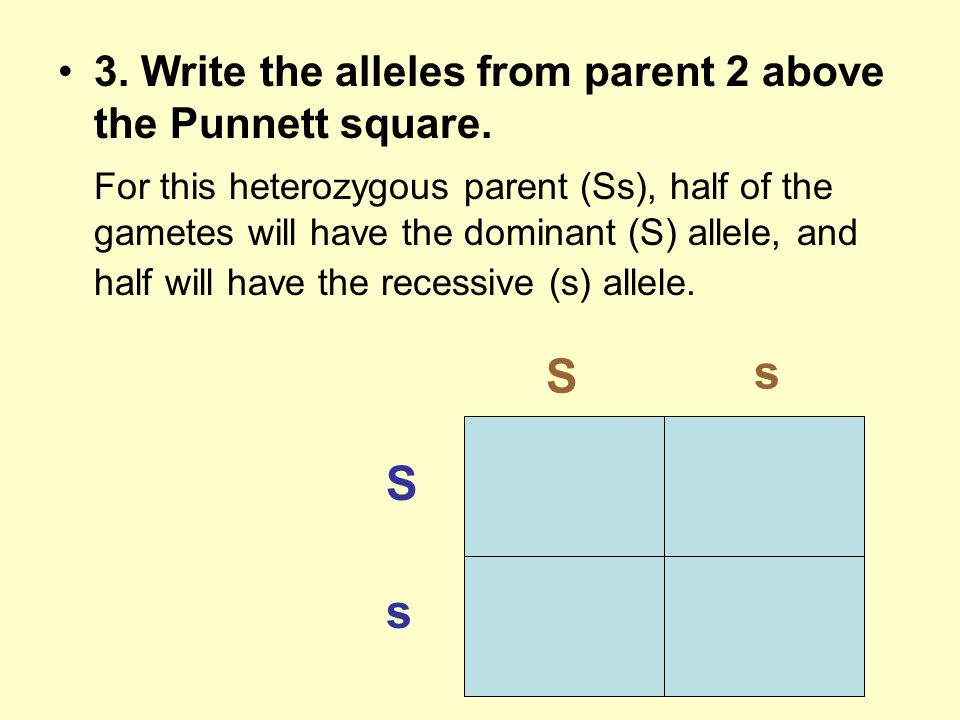 s S S s 3. Write the alleles from parent 2 above the Punnett square.