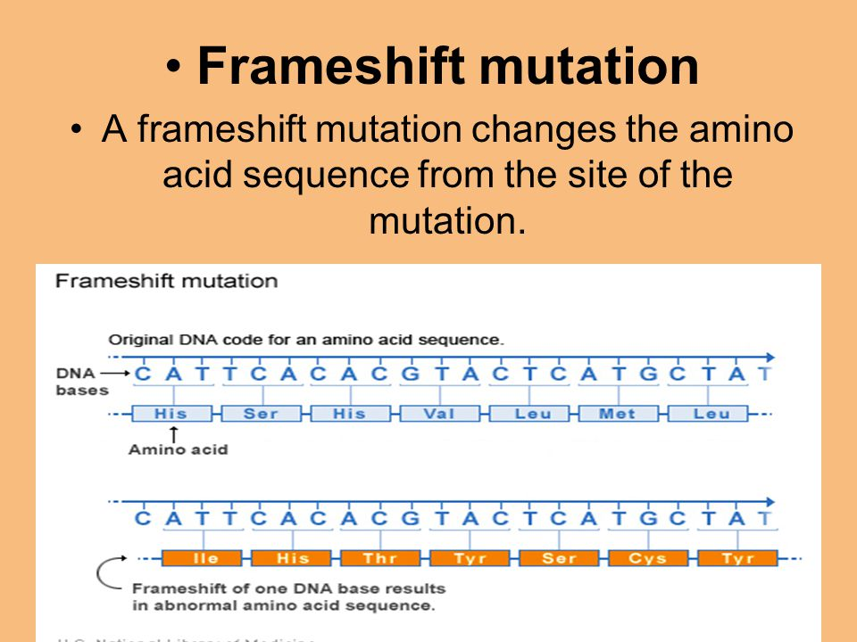 Frameshift mutation A frameshift mutation changes the amino acid sequence from the site of the mutation.