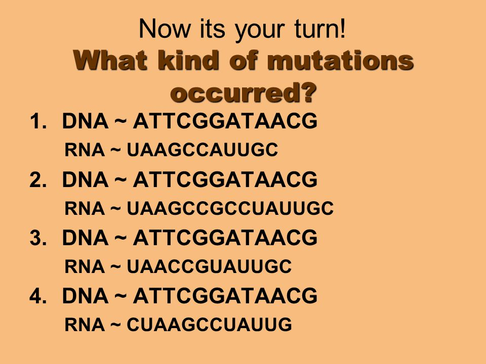 Now its your turn! What kind of mutations occurred