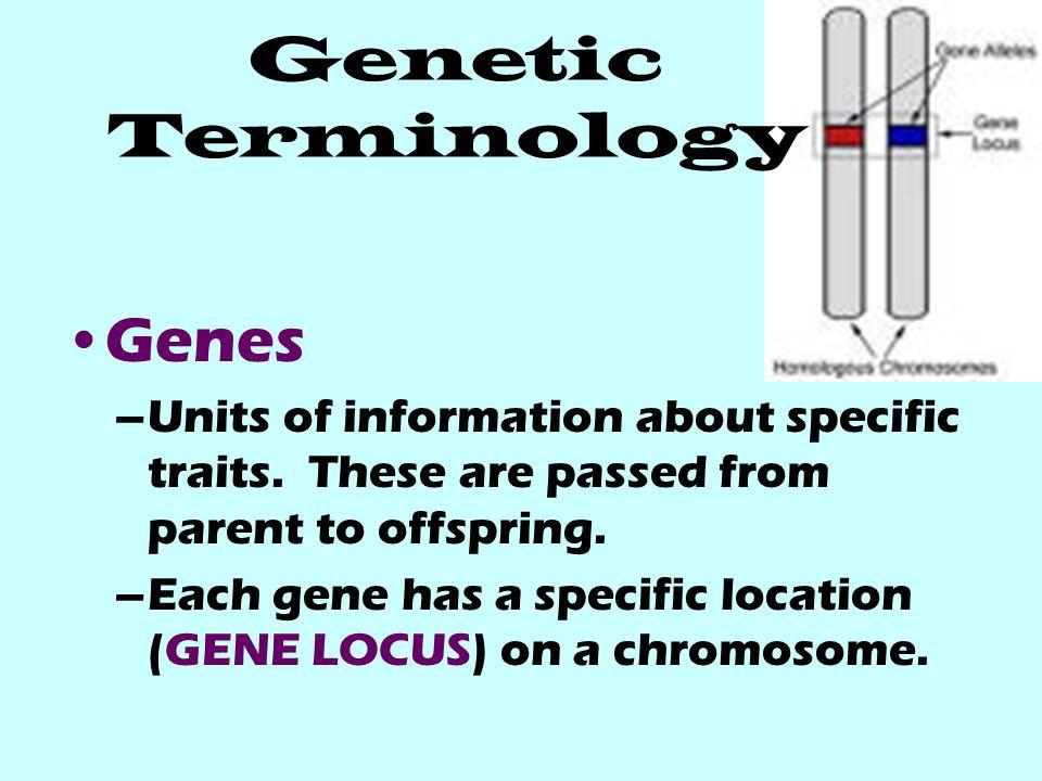 Genetic Terminology Genes