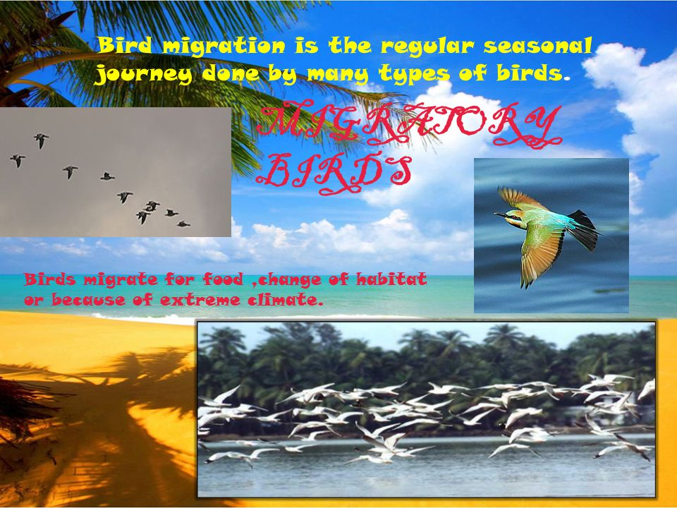 Bird migration is the regular seasonal journey done by many types of birds.