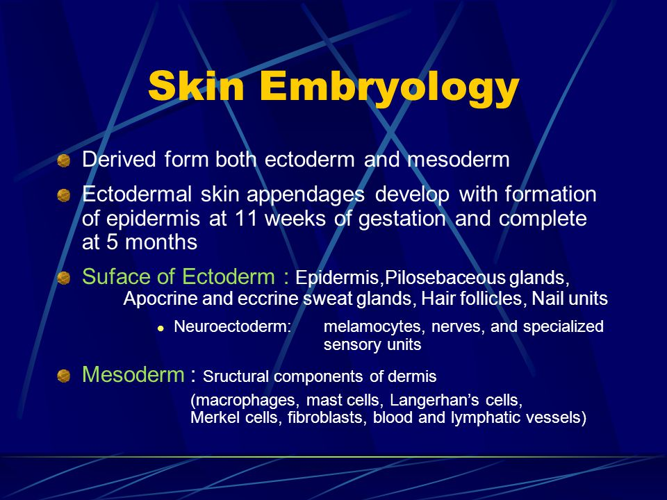 Skin Embryology Derived form both ectoderm and mesoderm