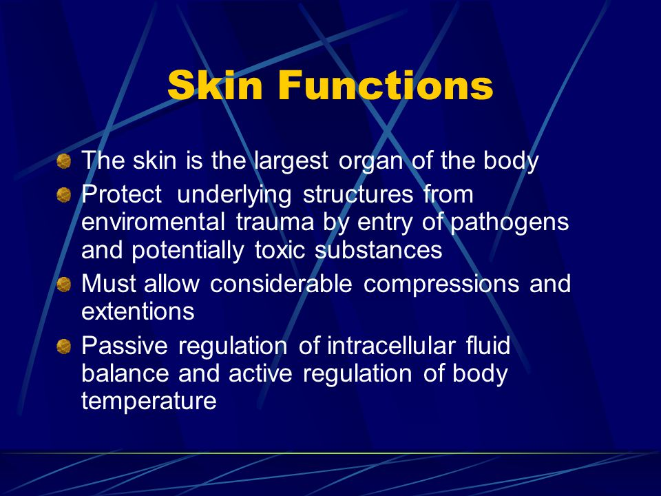 Skin Functions The skin is the largest organ of the body