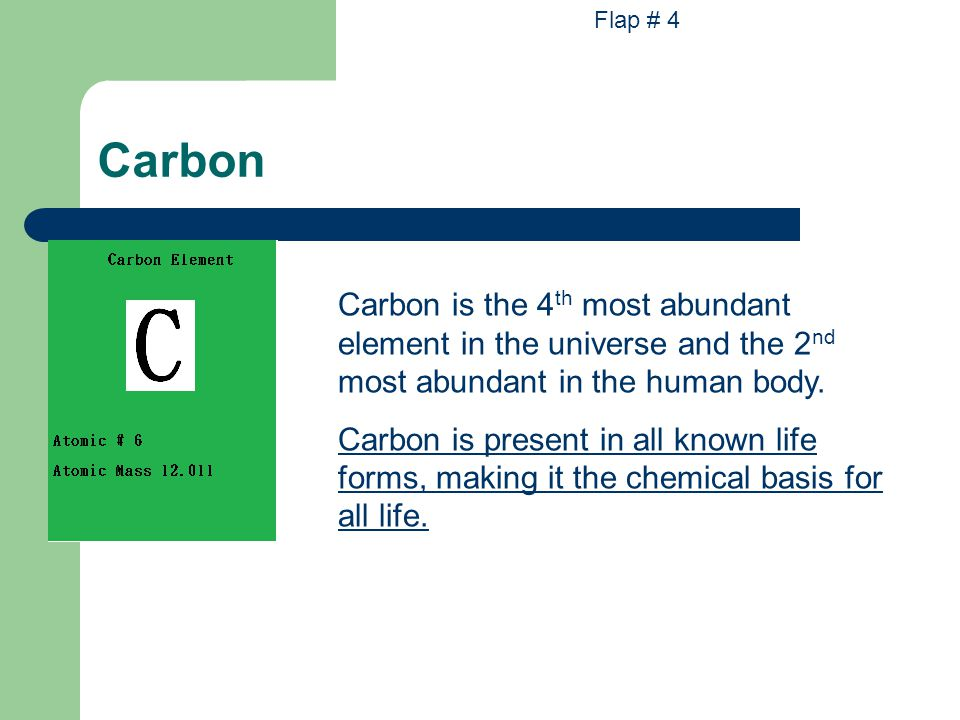 Flap # 4 Carbon. Carbon is the 4th most abundant element in the universe and the 2nd most abundant in the human body.