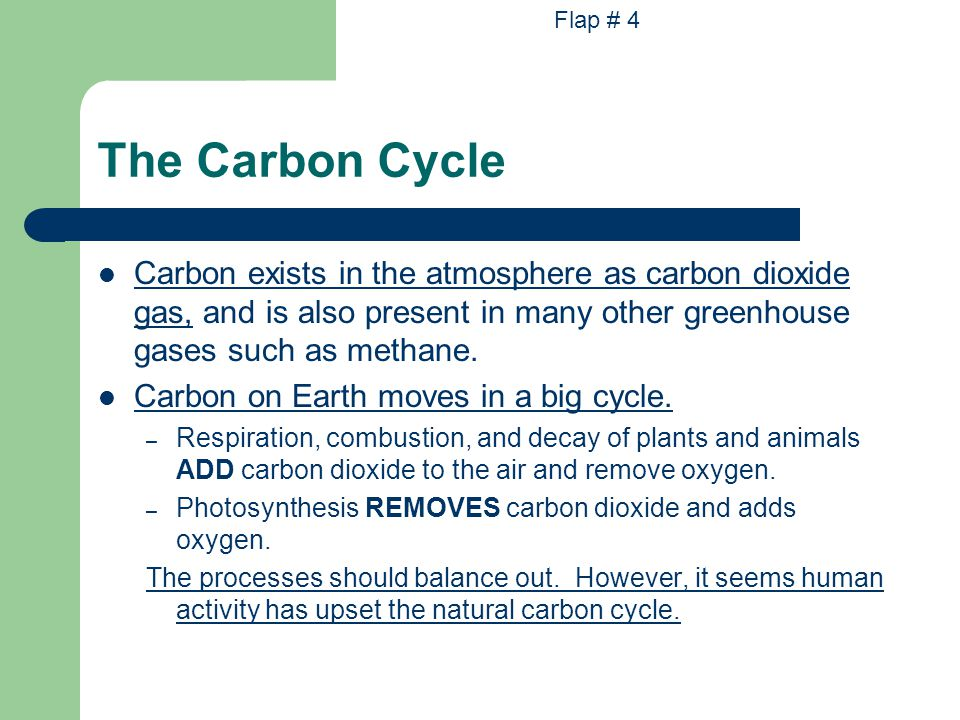 Flap # 4 The Carbon Cycle.