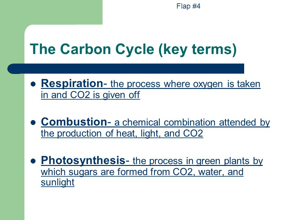 The Carbon Cycle (key terms)