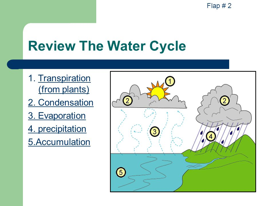 Review The Water Cycle 1. Transpiration (from plants) 2. Condensation