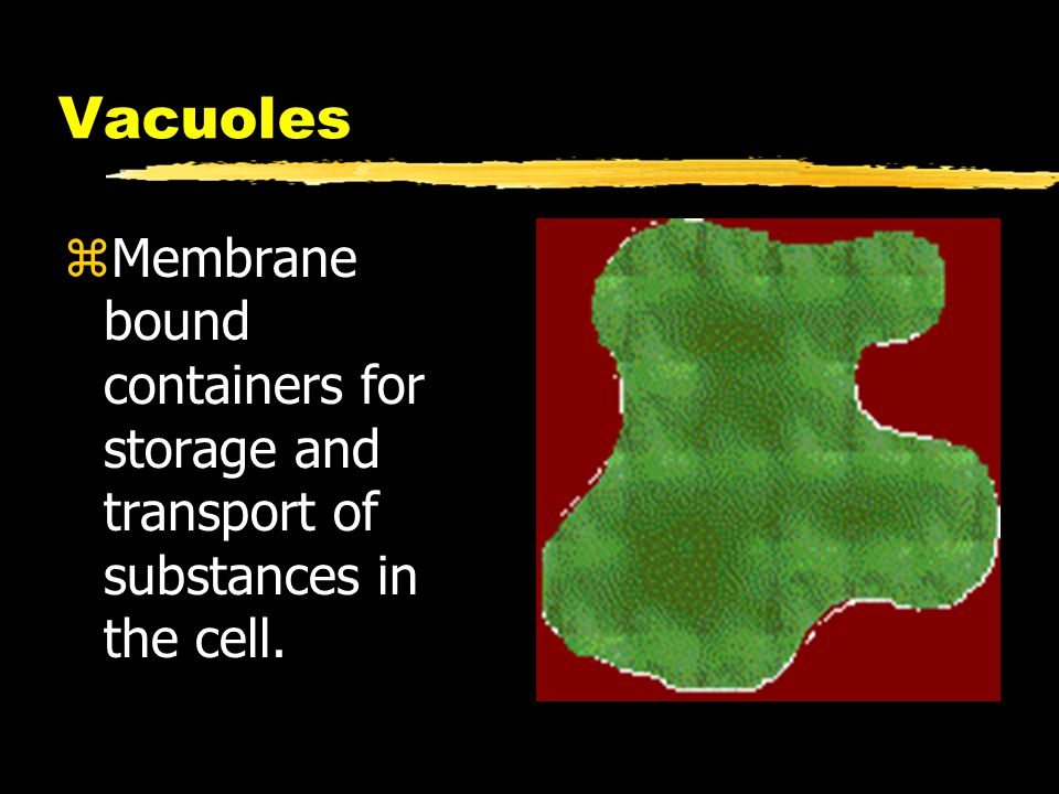 Vacuoles Membrane bound containers for storage and transport of substances in the cell.