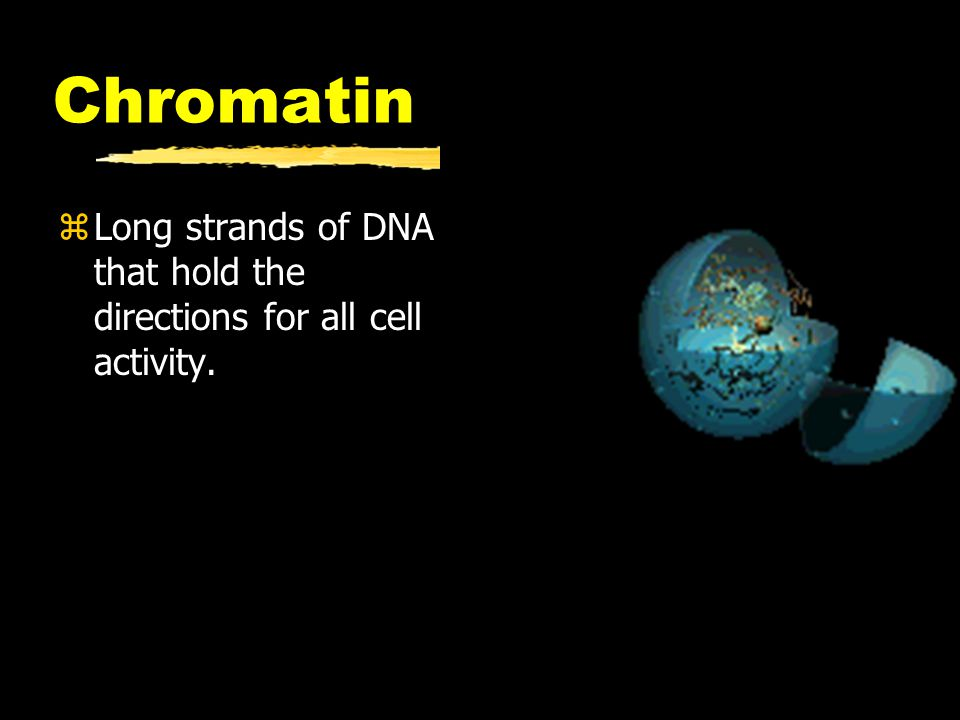Chromatin Long strands of DNA that hold the directions for all cell activity.