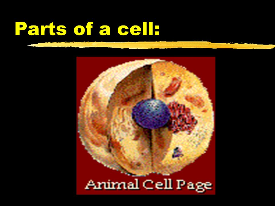Parts of a cell:
