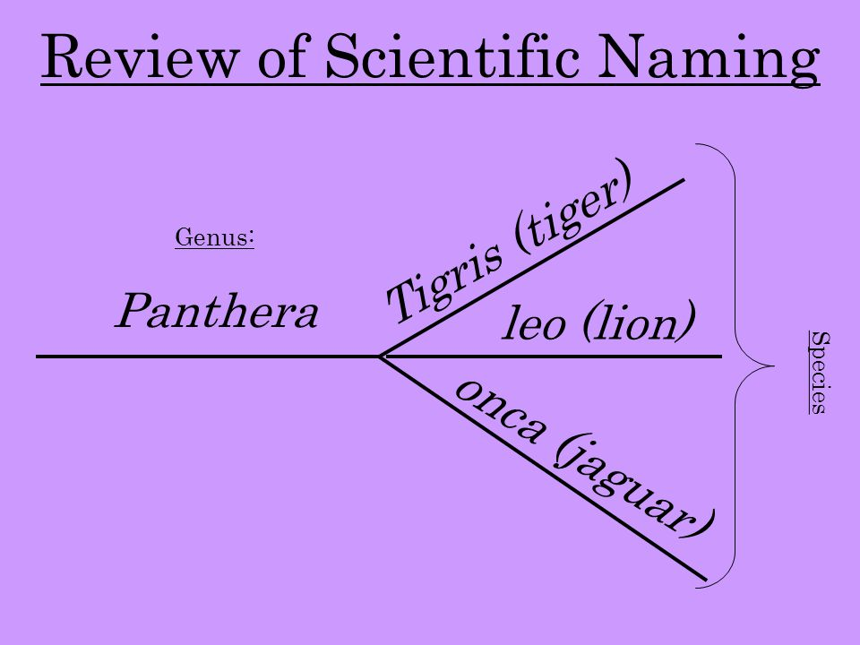 Review of Scientific Naming