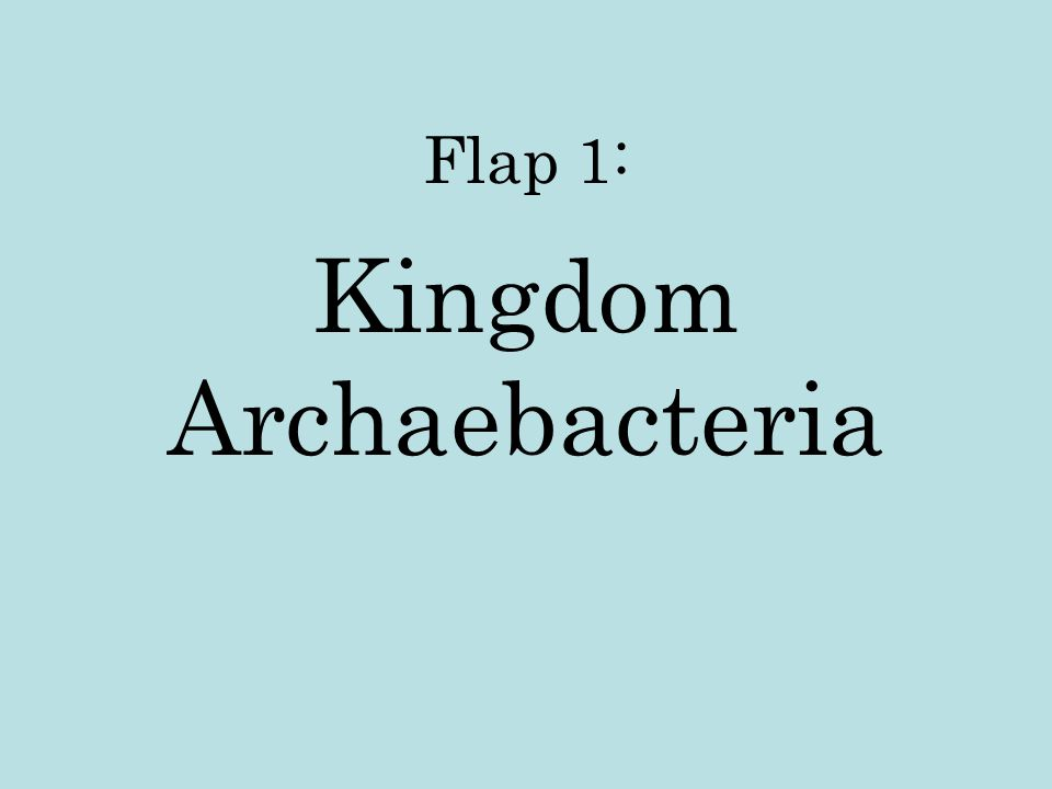 Flap 1: Kingdom Archaebacteria