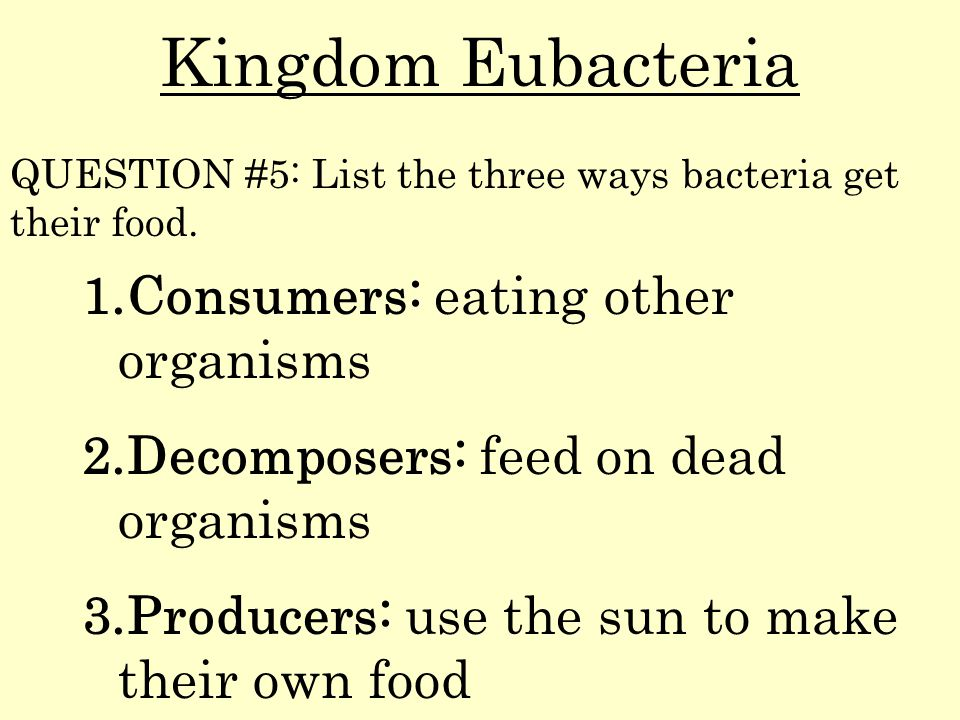 Kingdom Eubacteria Consumers: eating other organisms