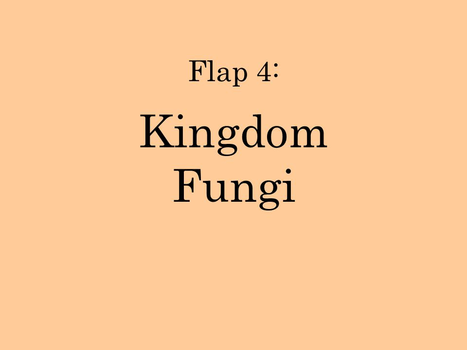 Flap 4: Kingdom Fungi