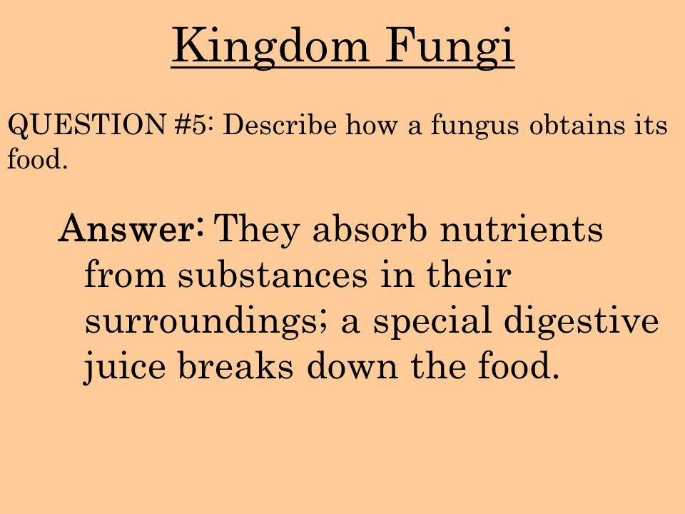 Kingdom Fungi QUESTION #5: Describe how a fungus obtains its food.