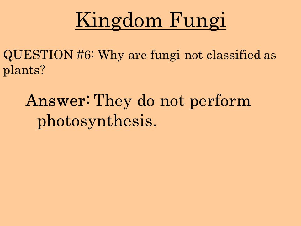 Kingdom Fungi Answer: They do not perform photosynthesis.