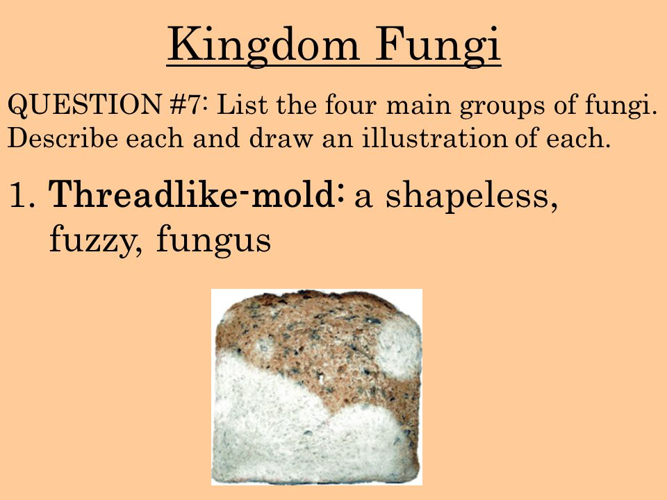 Kingdom Fungi 1. Threadlike-mold: a shapeless, fuzzy, fungus