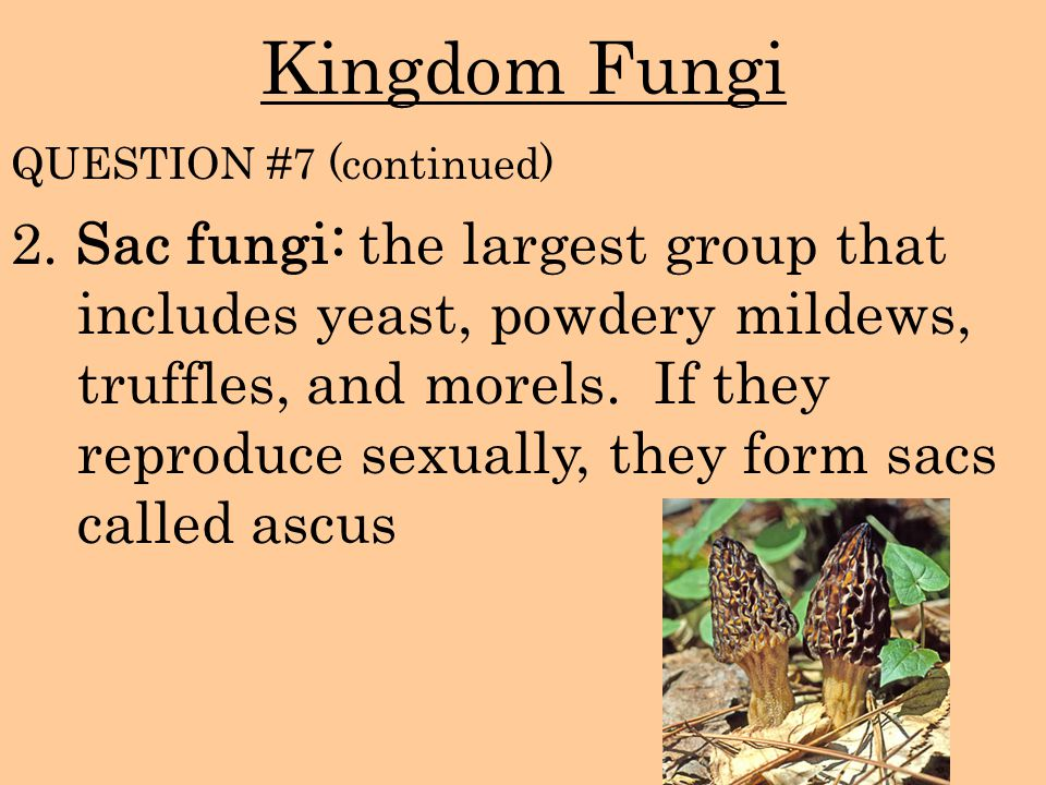 Kingdom Fungi QUESTION #7 (continued)