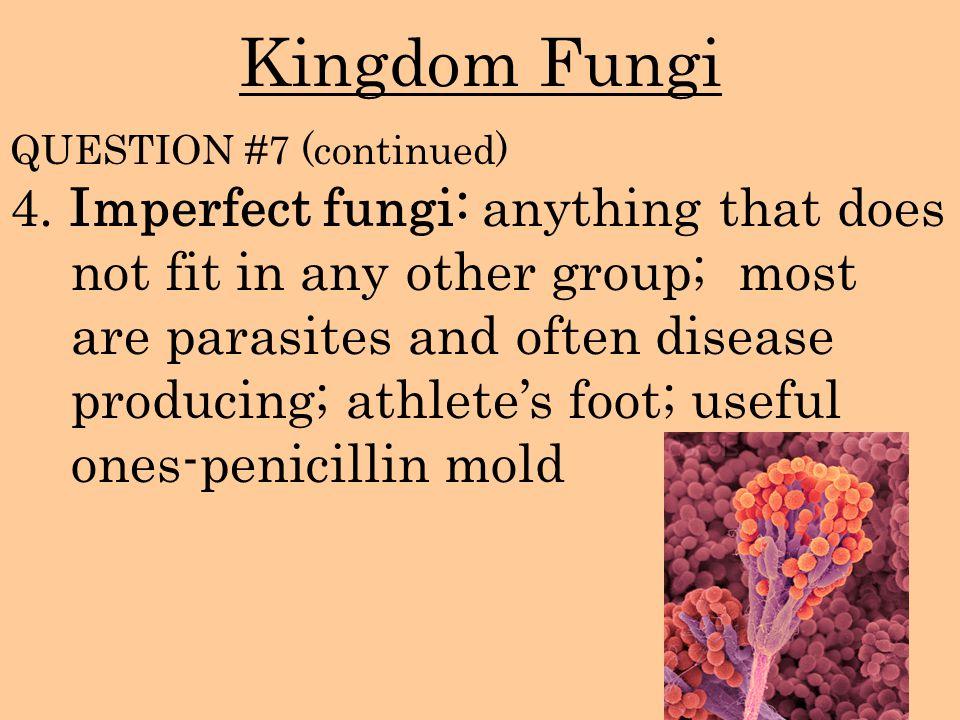 Kingdom Fungi QUESTION #7 (continued)