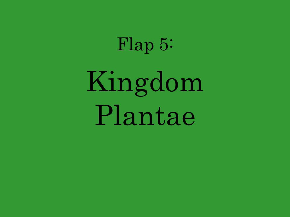 Flap 5: Kingdom Plantae