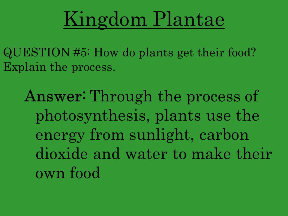 Kingdom Plantae QUESTION #5: How do plants get their food Explain the process.