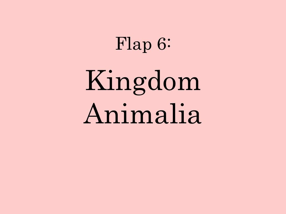 Flap 6: Kingdom Animalia