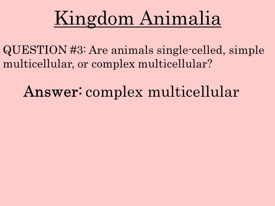 Kingdom Animalia Answer: complex multicellular