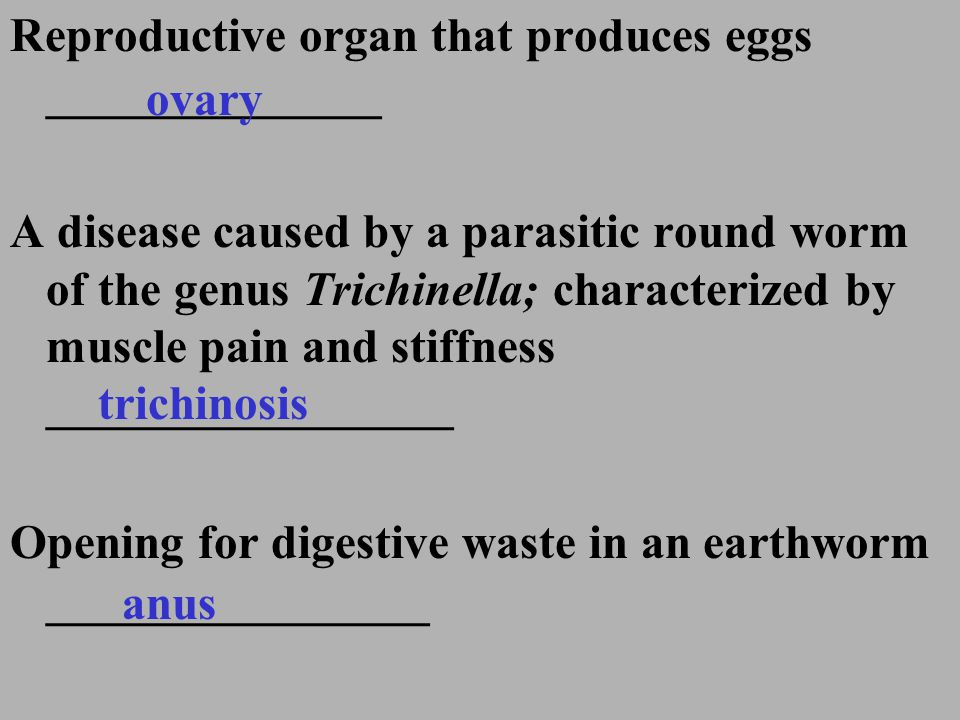 Reproductive organ that produces eggs ______________
