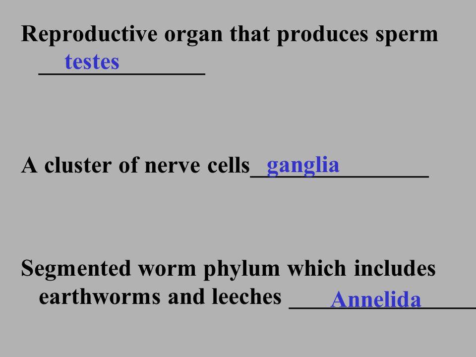 Reproductive organ that produces sperm ______________