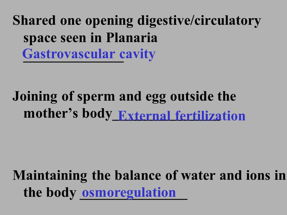 Shared one opening digestive/circulatory space seen in Planaria ______________