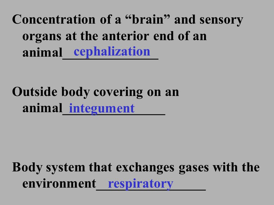 Concentration of a brain and sensory organs at the anterior end of an animal______________