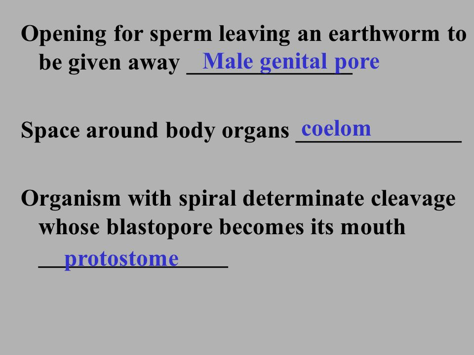 Opening for sperm leaving an earthworm to be given away ______________