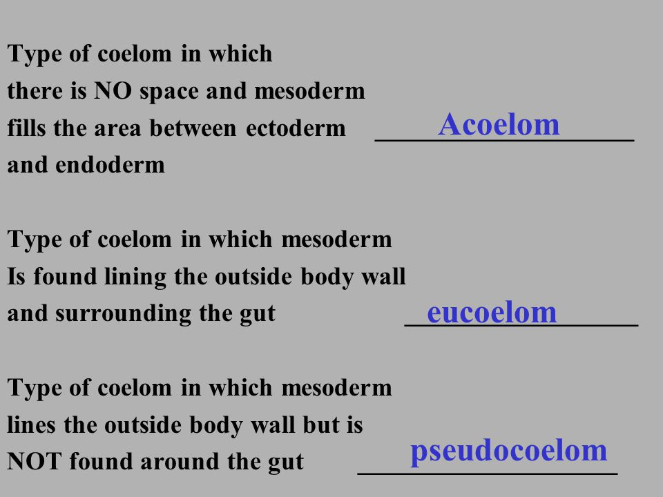 Acoelom eucoelom pseudocoelom Type of coelom in which