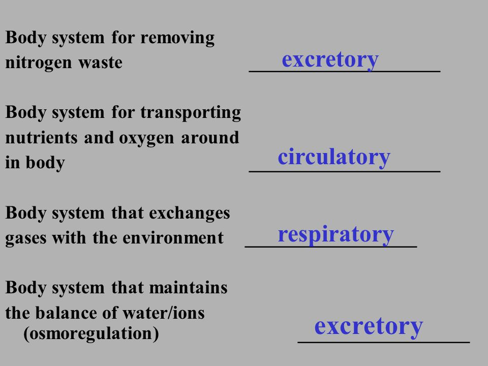 excretory excretory circulatory respiratory Body system for removing