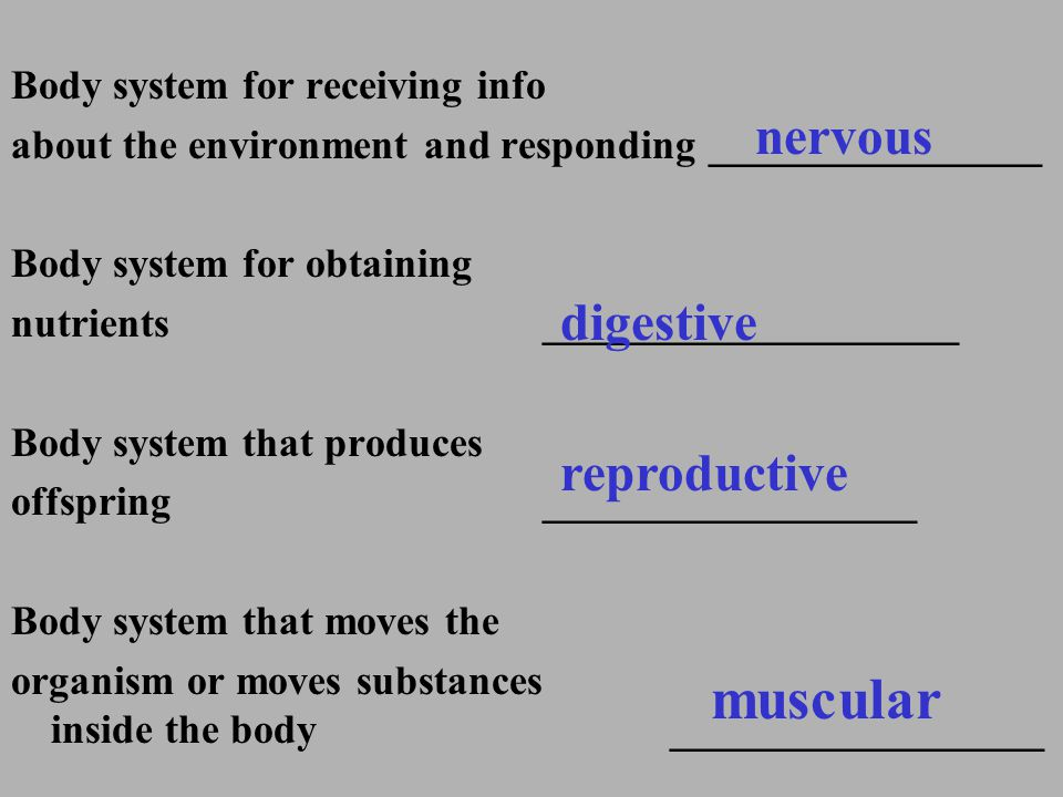 muscular nervous digestive reproductive Body system for receiving info