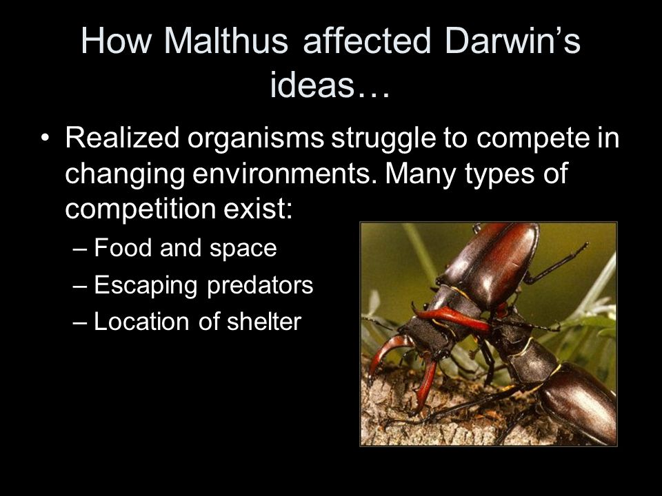 How Malthus affected Darwin's ideas…