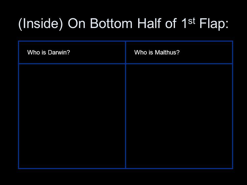 (Inside) On Bottom Half of 1st Flap:
