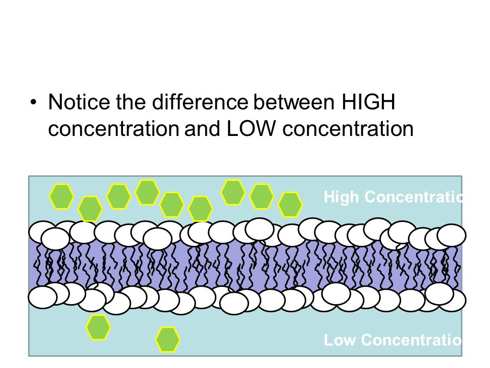 Notice the difference between HIGH concentration and LOW concentration