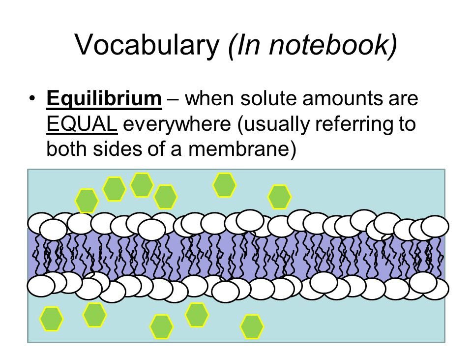 Vocabulary (In notebook)