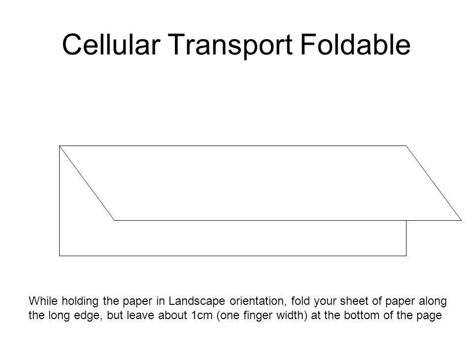 Cellular Transport Foldable