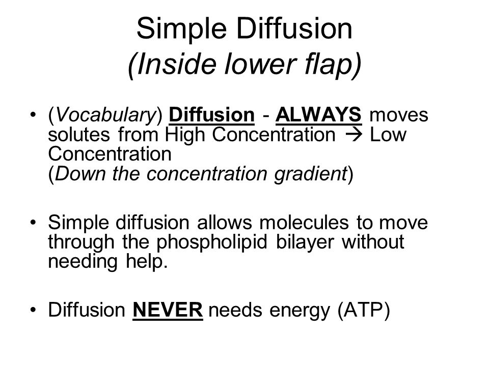 Simple Diffusion (Inside lower flap)