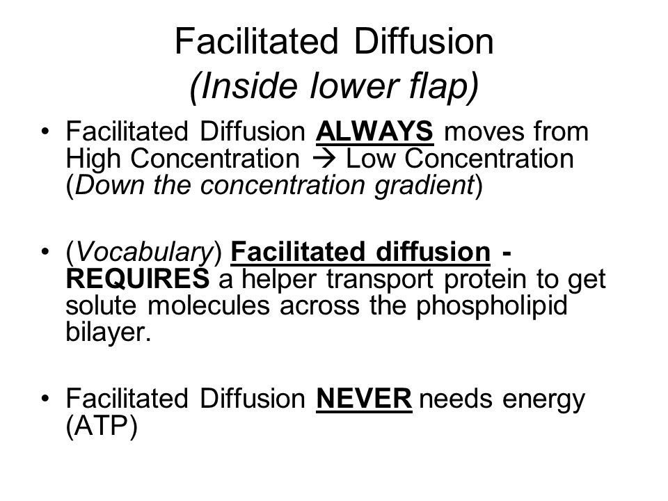 Facilitated Diffusion (Inside lower flap)