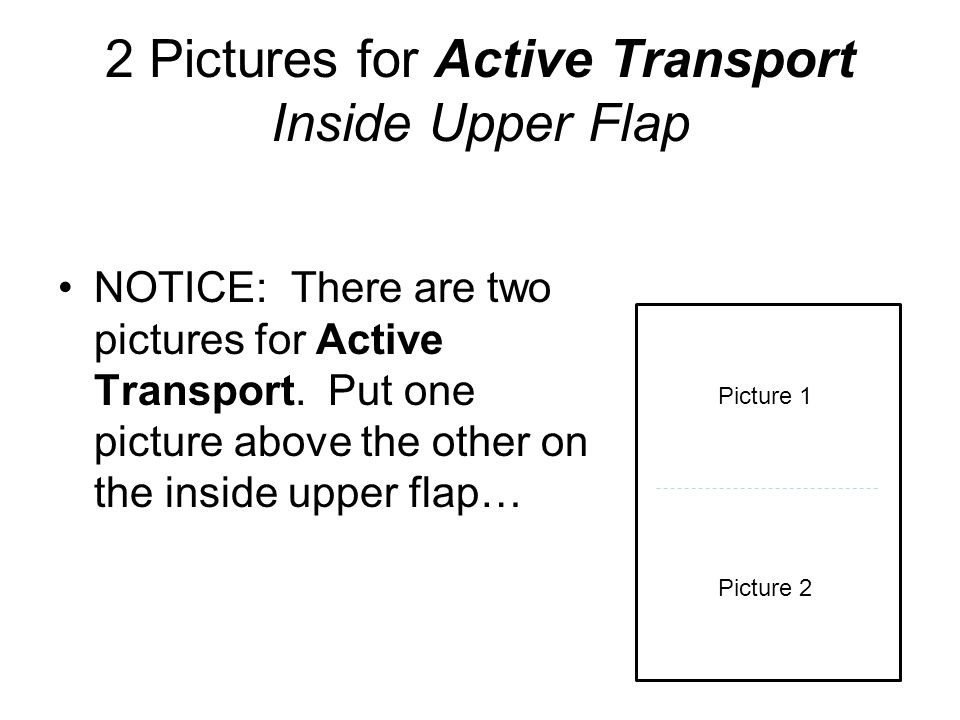 2 Pictures for Active Transport Inside Upper Flap