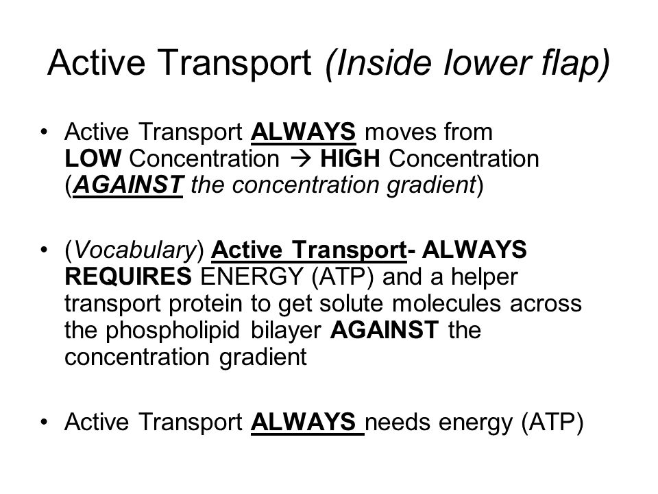 Active Transport (Inside lower flap)