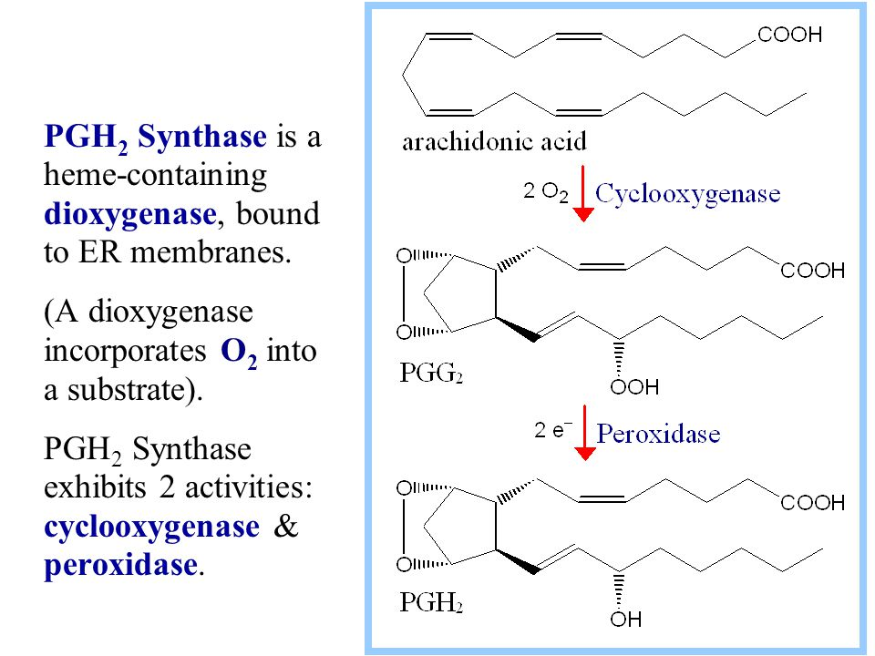 PGH2 Synthase is a heme-containing dioxygenase, bound to ER membranes.