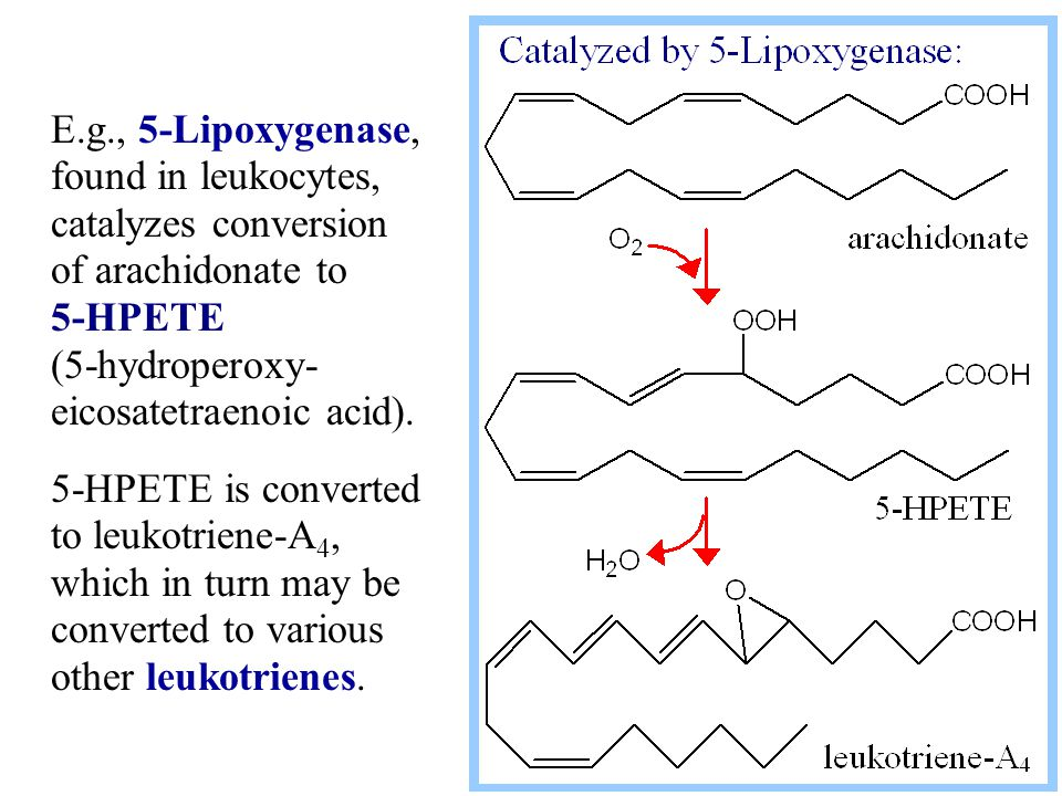 E.g., 5-Lipoxygenase, found in leukocytes, catalyzes conversion of arachidonate to 5-HPETE (5-hydroperoxy- eicosatetraenoic acid).
