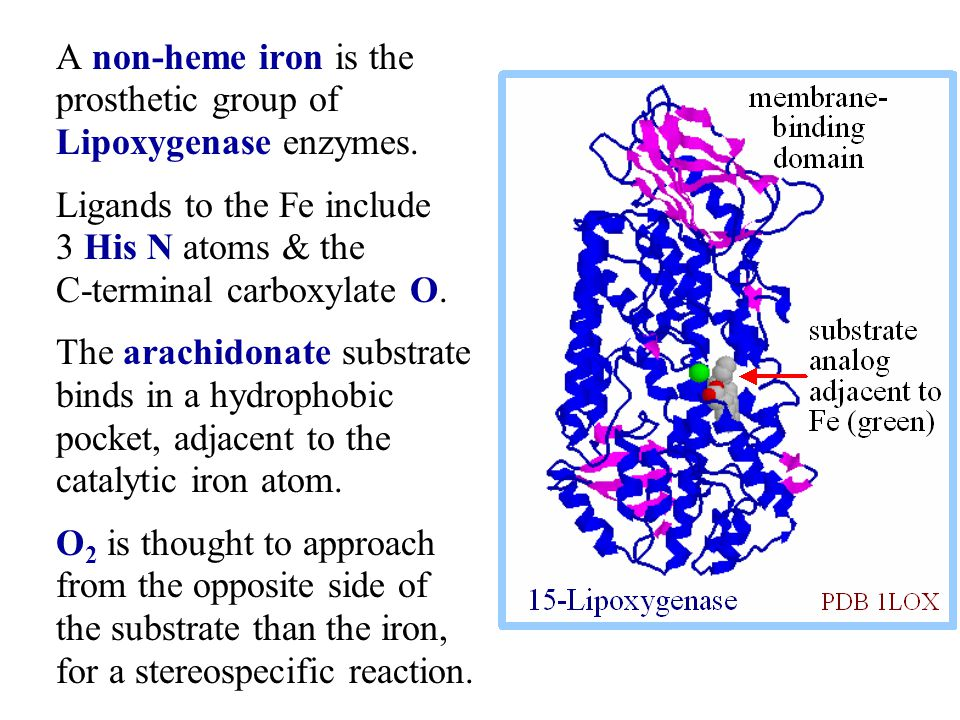 A non-heme iron is the prosthetic group of Lipoxygenase enzymes.